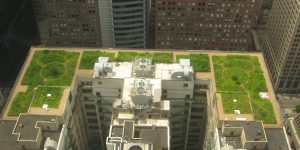 Creating your very own Green Rooftop